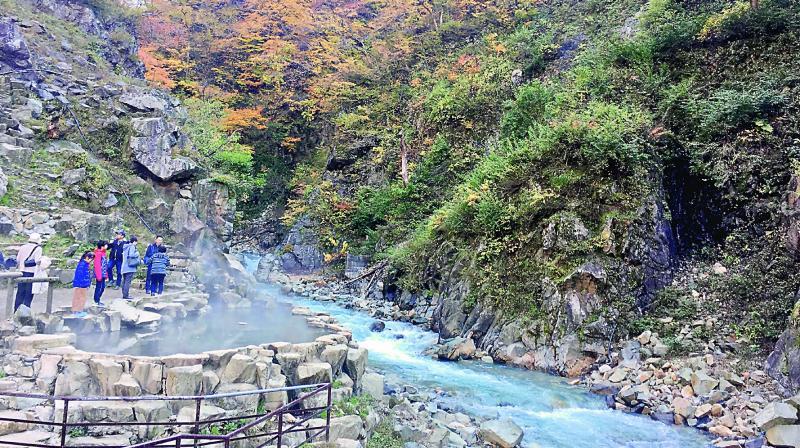 The inside of the Jigokudani Monkey Park where the monkeys often gather.