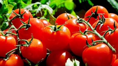 Tomato prices have increased sharply in the last few days as the supply has been affected because of floods and heavy rains in the key growing states, said a wholesale trader at Azadpur Mandi.