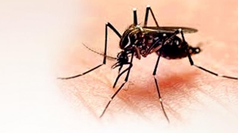 This year 3 confirmed dengue deaths and 2 suspected dengue deaths were reported in the state.