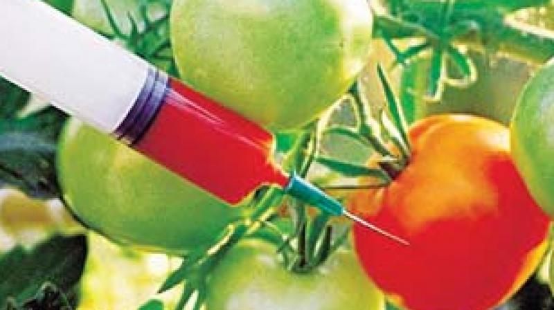genetically modified crops need detailed evaluation say doctors