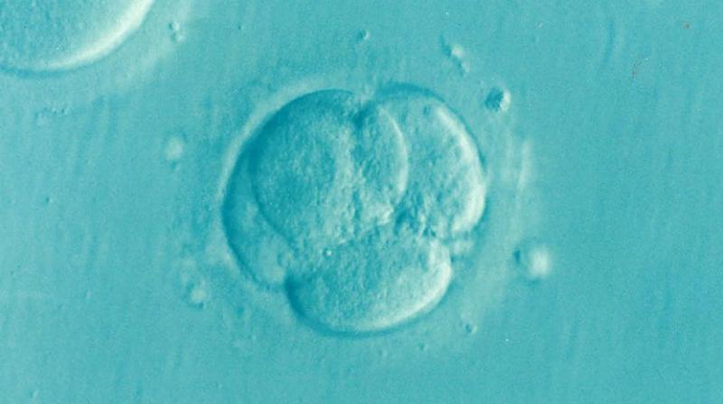 Lawsuit filed against Calif. fertility clinic over destroyed eggs
