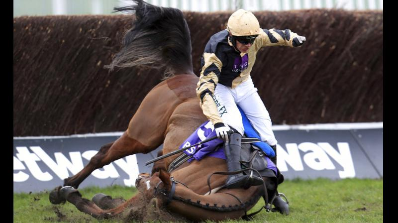 Cheltenham Gold Cup's steeplechase, which is open to horses aged five years and over, is most prestigious of all National Hunt events. (Photos: AP)