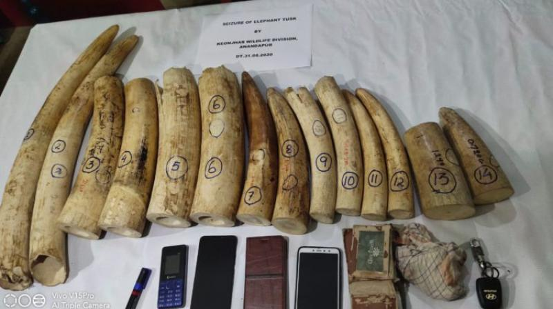 Tusked seized by Odisha forest officials