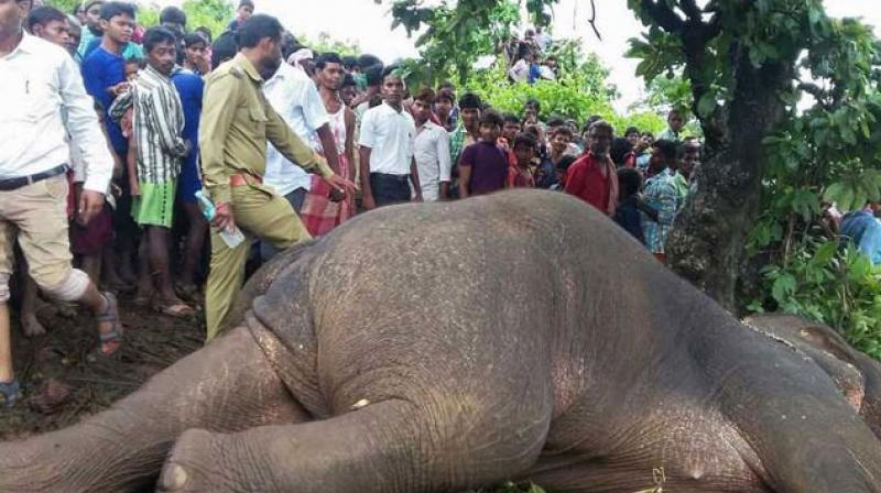 A rogue elephant was shot dead in Taljhari forest of the Sahibgunj district in Jharkhand. (AFP)