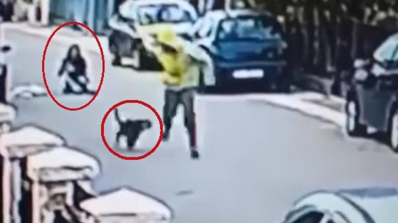 Stray dog saves woman from mugger (Watch video)