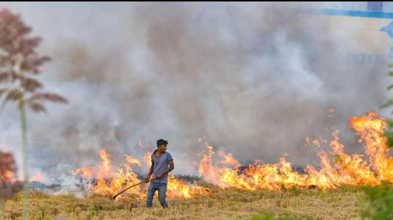 Since farmers don't have enough time or money to store the straw, they found the fastest and cheapest solution -- burning it. (Photo: PTI)