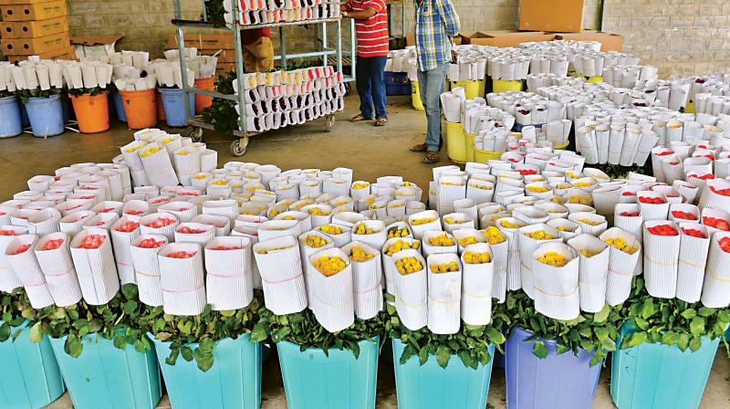 The Indian diaspora too buys a lot of cut roses during Diwali, Dussehra, Ganesh Chaturthi and also during Indian weddings held overseas.