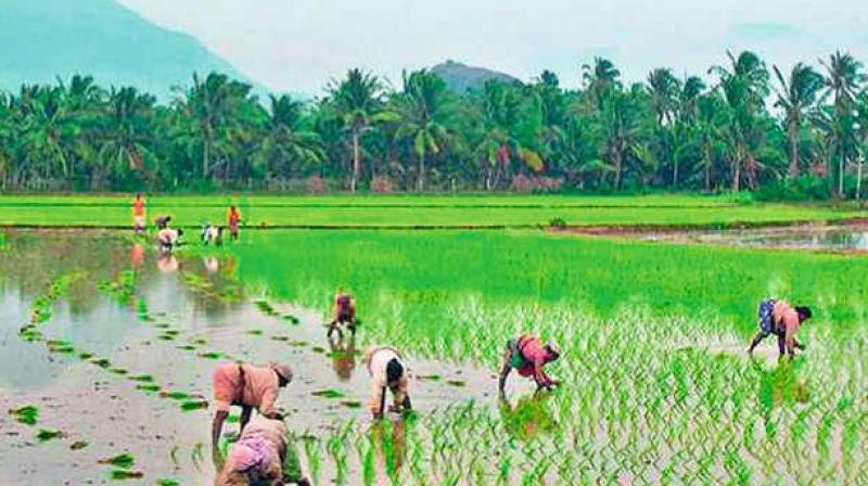 A senior official from the Maharashtra cooperation department showed a list of potential beneficiaries of farmers having a common Aadhaar number, which has become a cause of concern for the government. (Representational Image)