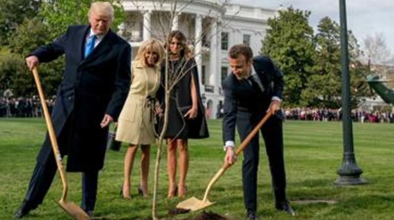 The French president offered the young oak to Trump on the occasion of a state visit to Washington in 2018, and the two shovelled dirt around it under the watchful eyes of their wives -- and cameras from around the world.(Photo: AP)