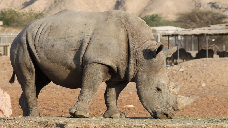A Kenyan wildlife conservancy is teaming up with Tinder for a campaign called