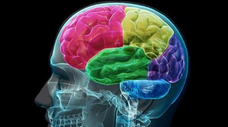 Understanding Brain Mechanisms Of >> Brain Regulates Social Behaviour Differently In Men Women