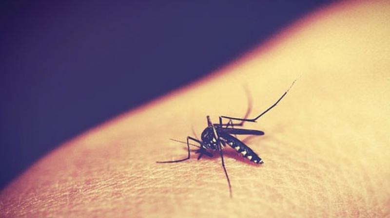 Malaria caused widespread deaths in ancient Roman Empire