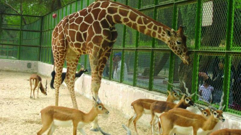 Zoos have often come under fire for unethical practices. So is it time to do away with them?