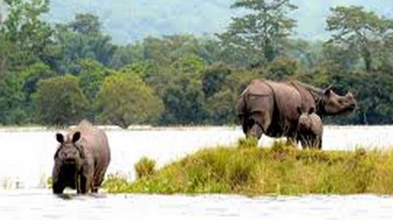The forest department is fully alert on the National Highway (NH) 37 in order to avoid any poaching chances by hunters. This highway starts from Sutarakandi near Karimganj in Assam and terminates at Bhali in Manipur. (Photo: Representational I ANI)