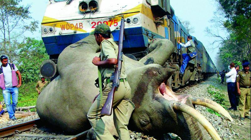 The ministry said that zonal railway divisions had been working on action plans in coordination with the forest ministry to prevent the deaths of animals and elephants crossing the tracks.