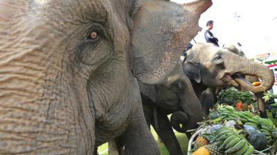The annual King's Cup Elephant Polo tournament raises funds for projects that better the lives of Thailand's wild and domesticated elephant population. (Photos: AP)