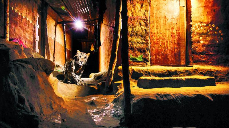 A picture of a leopard in a tribal hamlet