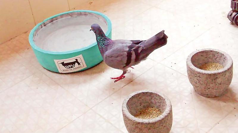 Bird quenches its thirst from a bowl of water. (Photo: DC)