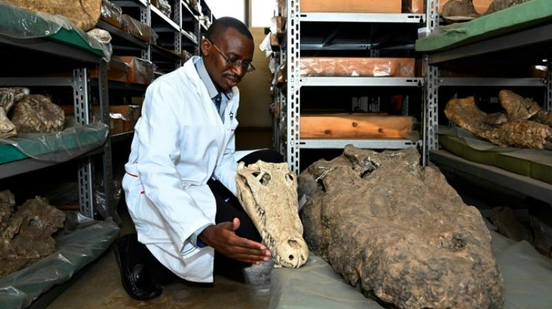 But the remarkable fossils were not unearthed this year, or even this decade. They weren't even found this century. (Photo: AFP)