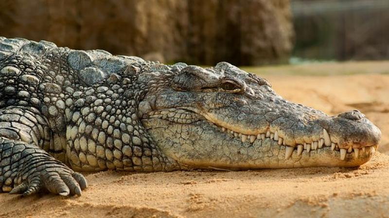 "The crocodile ""has lived here since 2005,"" a neighbour told local television. ""He was little at the time."" (Photo: Pixabay)"