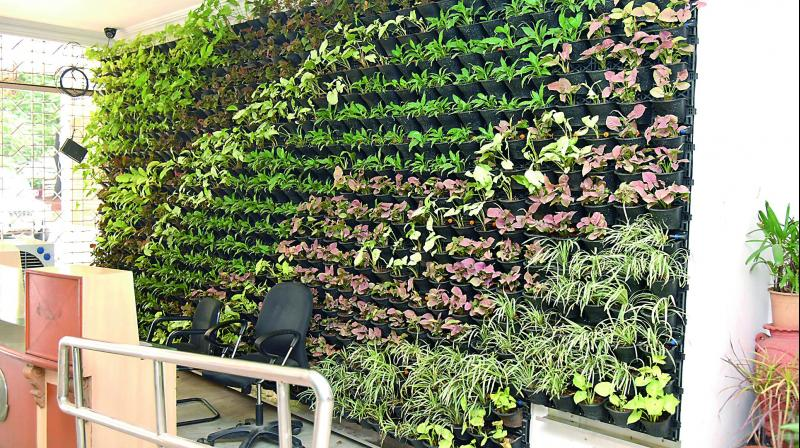 A Vertical Garden At The Reception Of The Greater Hyderabad Municipal  Corporation Office At Khairatabad.