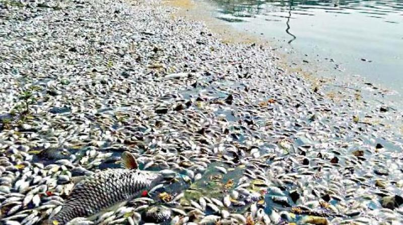 Telangana: Probe into mass fish death ordered