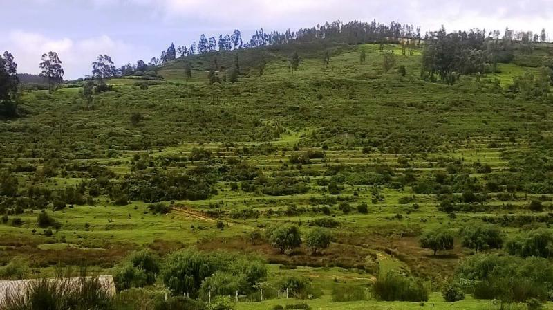 80 acre of land at Kuruthukuli near Ooty to be known as Guinness Park