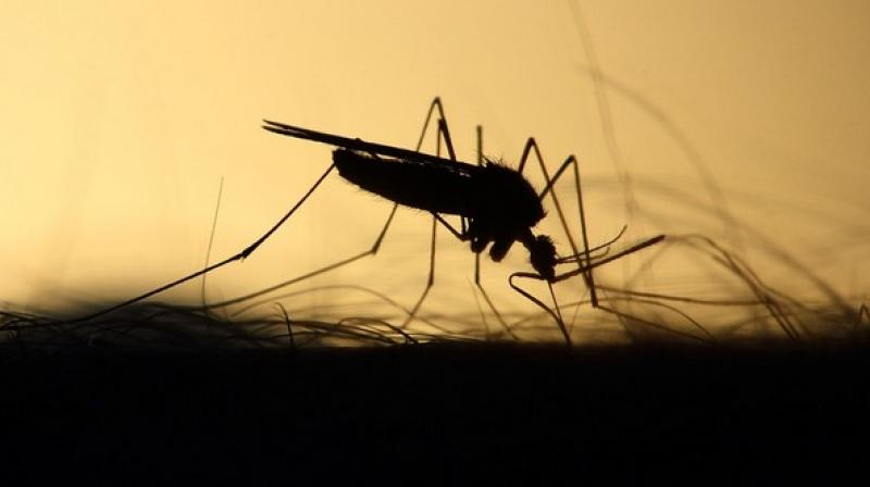 It's the first evidence from large-scale field trials that mosquitoes are less likely to spread dengue and similar viruses when they also carry a type of bacteria that's common in insects and harmless to people.