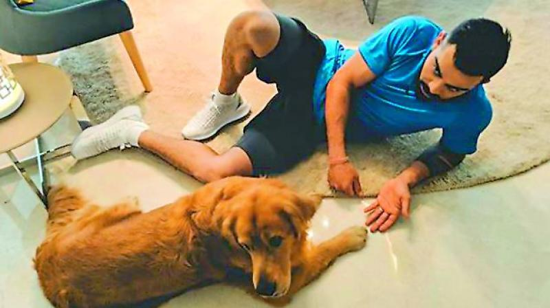 Indian captain Virat Kohli was seen making friends with another sniffer dog, a golden retriever called Prince. Virat shares a very close and intimate friendship with his own pet, Bruno, a beagle. His first pet was a white Pomeranian and then he had a Golden Labrador Retriever named Rico. (Pic from Virat's insta post)