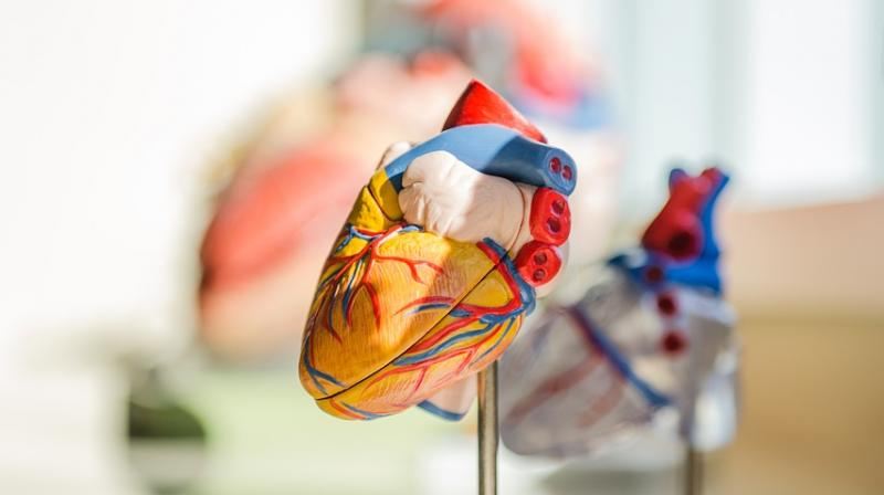 Scientists extracted fatty tissue from the patient and processed them to form diverse personalised bio-inks to 3D print the heart, complete with cells, blood vessels, ventricles, and chambers. (Photo: Pixabay)