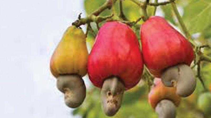 A cashew processing unit owner hailing from Chandanathoppe in Kollam attempted suicide facing recovery of Rs 7.5crore.