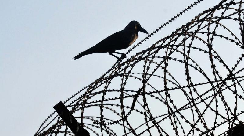 A crow rests on the barbed fencing of the Thiruvananthapuram airport. Bird hits are a major problem in Valiyathura and its premises as waste dumping is very common in these areas.