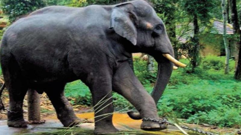 5 jumbos killed on tracks in Assam