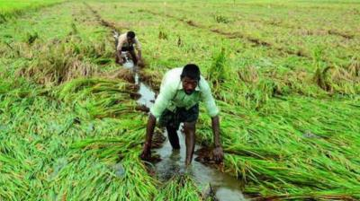Besides PM-KISAN, the government has proposed to increase the allocation for the Pradhan Mantri Fasal Bima Yojana (PMFBY) to Rs 14,000 crore for the current fiscal against the revised estimate of Rs 12,975.70 crore for the 2018-19. (Representional Image)