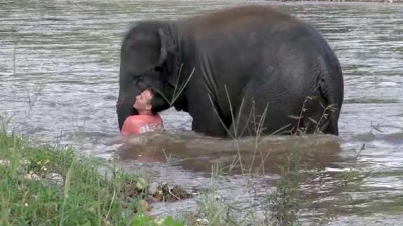 The footage shows Kham Lha, the baby elephant, rushing to the aid of his trainer Darrick who was swimming in the water. (Credit: YouTube)