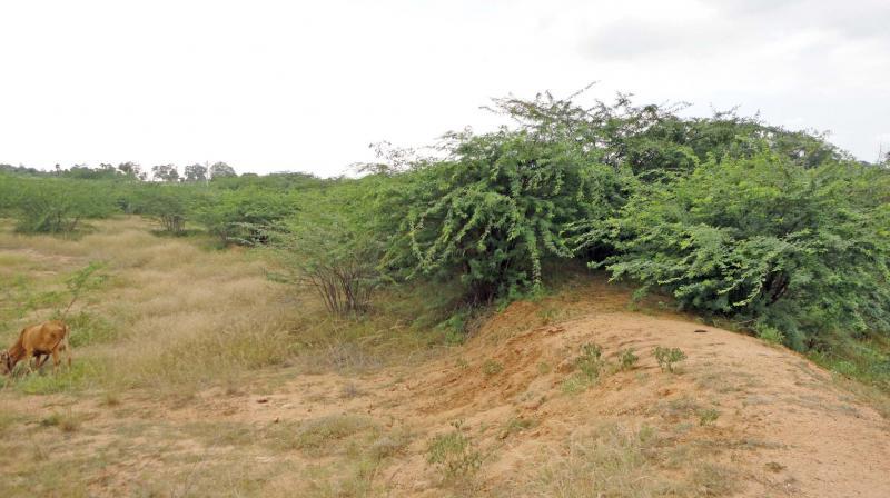 A dry pond at Alangudi in Pudukottai district.   (Image: DC)