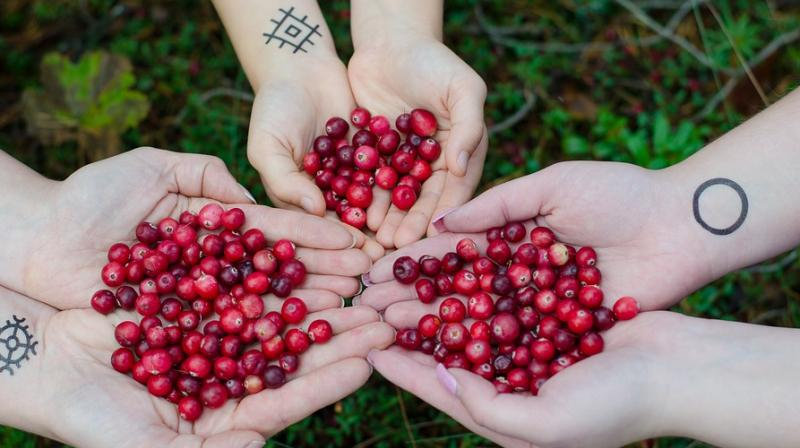 Cranberry reduces risk of urinary tract infection recurrence in women. (Photo: Pixabay)