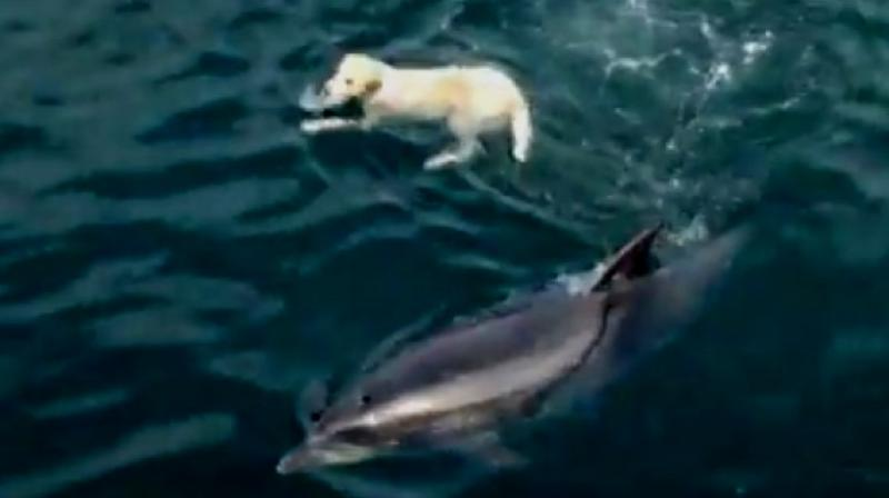 Ben mysteriously knows whenever Duggie approaches the shore (Photo: YouTube)