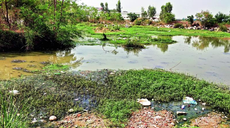 Meedhikunta Lake at Miyapur gets polluted by sewerage water from nearby apartments and colleges.