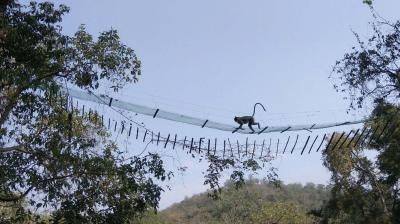 Chinnar Wildlife Sanctuary | Deccan Chronicle