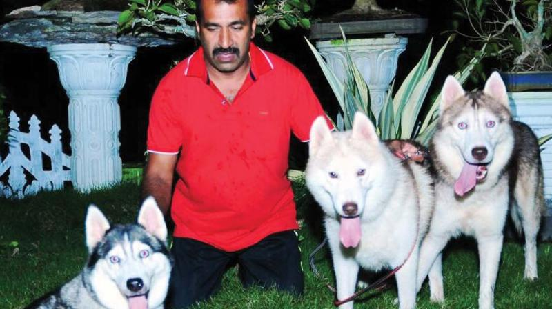 Kerala Exotic Dogs On Decline