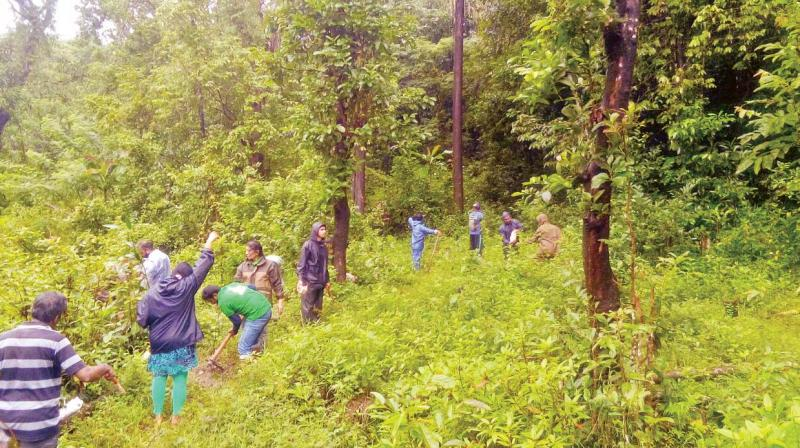 Environmentalists and nature lovers at the Kudremukh National Park to participate in  'Hasiru Hodike', on Sunday.