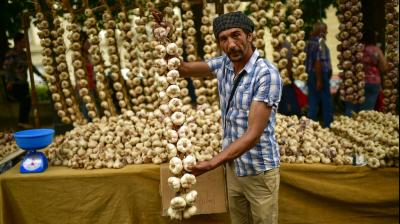 Every year a traditional garlic market is set on the Saint James patron day in Vitoria gathering producers of all around Spain. (Photos: AP)