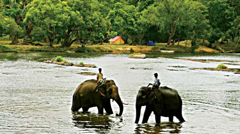 Elephants at Dubare camp