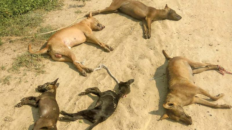 40 stray dogs killed by civic body in Telangana, 4 officials