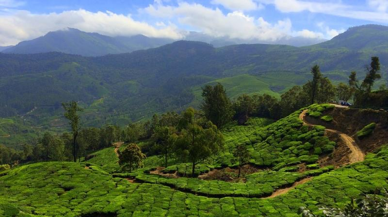 5 spectacular spots you must explore in Munnar. (Photo: Pixabay)