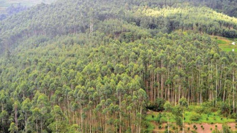 Environmentalists allege that the government and the forest dept worked hand in hand to allow the encroachments, which the Prime Minister inaugurated in February 2017.