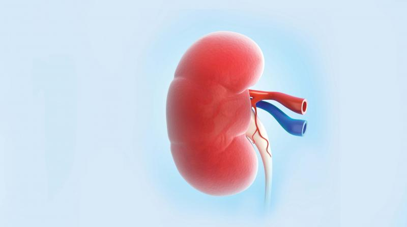 Kidney Dysfunction More Common In Women Than Men