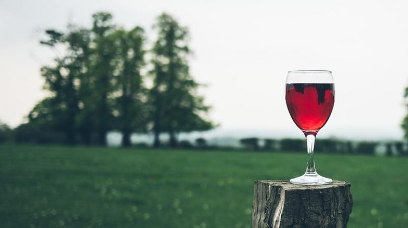 Traditionally, it was been believed wine growing and wine production developed in Italy in the Middle Bronze Age
