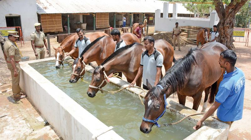 The shelters of the horses are covered with vetiver screens and water is sprayed regularly.